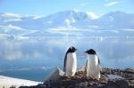 penguins_cut