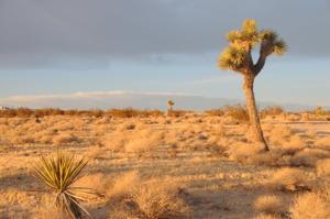 Leg-0032-Mojave-Desert